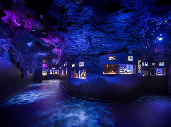「沼津港深海水族館」激レア水族館にある、世界唯一の〇〇とは?!