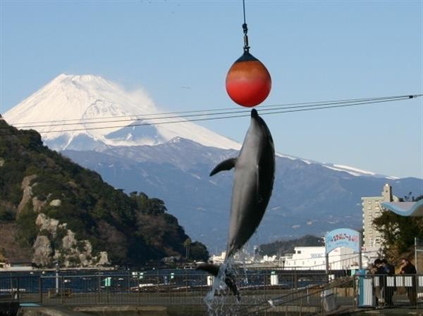 「みとしー」で海の生き物とふれあおう!伊豆・三津シーパラダイス