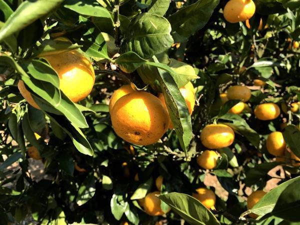 季節のフルーツが食べ放題!1年通して楽しめる「伊豆フルーツパーク