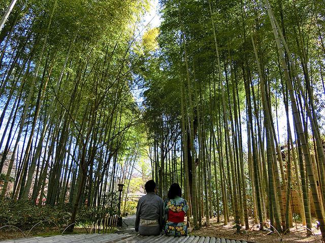 桂川の散策道「竹林の小径」で小京都を感じる